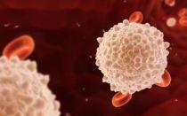 Лейкоциты в уретре: норма у женщин и отклонения