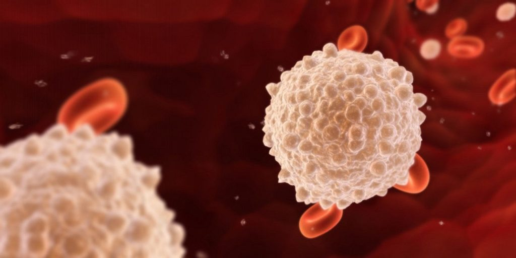 лейкоциты и эритроцы